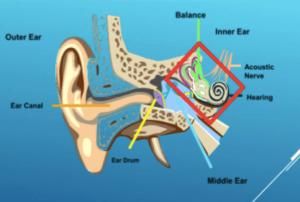 ear-diagram-hearing-page-hearing-injury-min